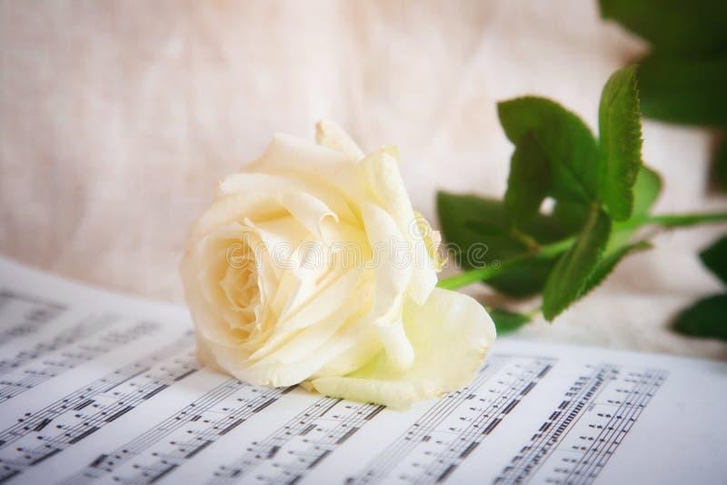 Fond sensible avec la rose blanche et les notes musicales images libres de droits