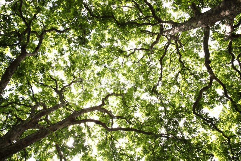 Fond simple d'arbres image stock