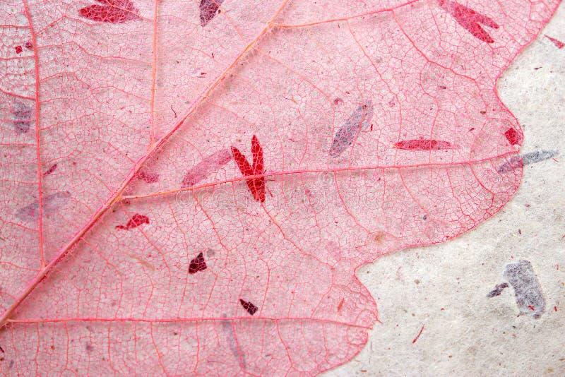 Fond squelettique rose de feuille photos libres de droits