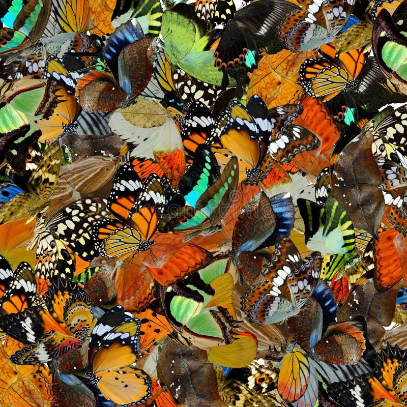 Fond stupéfait fait en pilling vers le haut des papillons colorés dans le dif photographie stock libre de droits