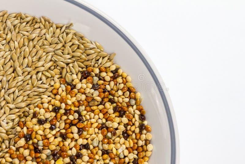 Fond texturisé de graines sèches de millet beau images stock