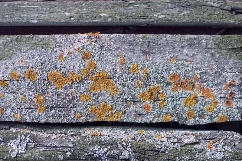 Fond texturis? de vieux conseils fan?s gris couverts de champignon et de mousse photos stock