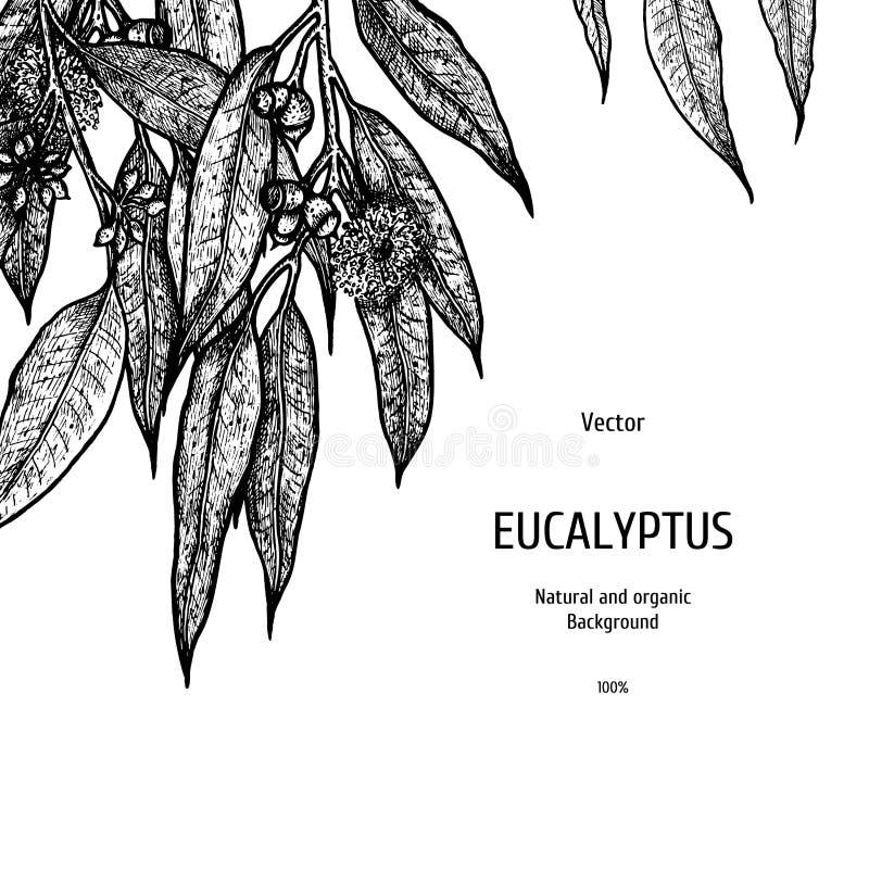 Fond tiré par la main d'eucalyptus Modèle de fines herbes Croquis de vecteur d'usine Conception de disposition pour l'empaquetage illustration stock