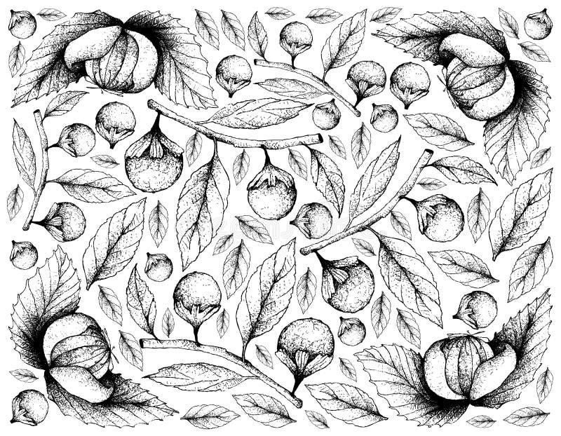 Fond tiré par la main de Dengen et de Cordia Caffra Fruits illustration de vecteur