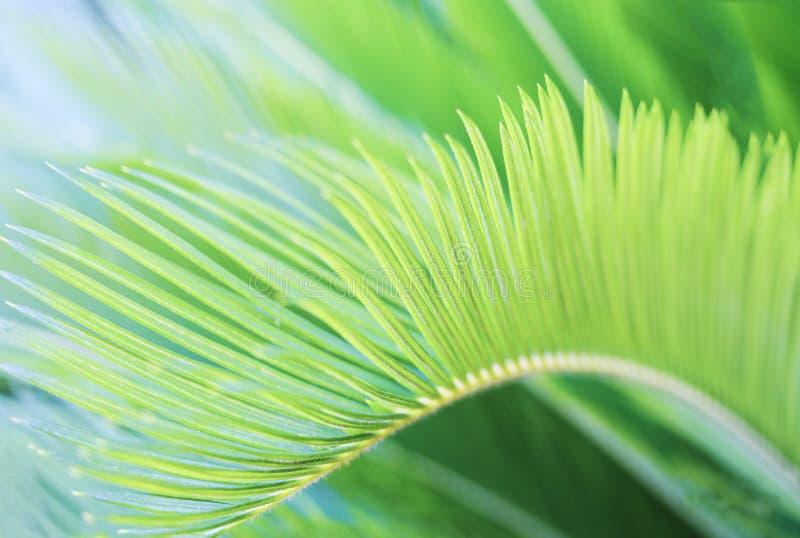 Fond tropical brouillé naturel de verdure avec la palmette image libre de droits