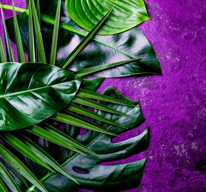 Fond tropical créatif de feuilles Feuilles tropicales de Trandy sur le fond ultra-violet d'ardoise - couleur de l'année 2018 image stock