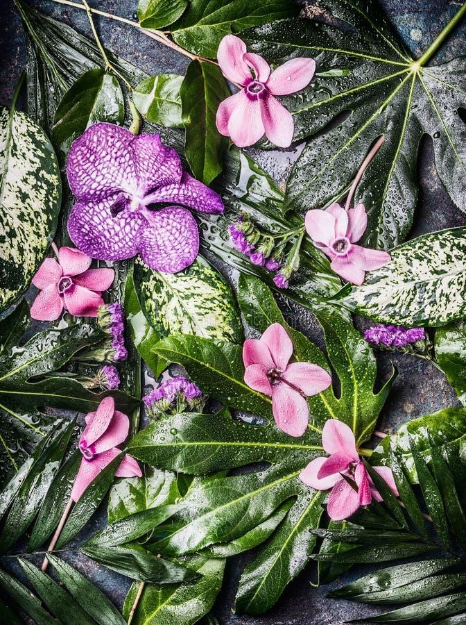 Fond tropical créatif de nature avec de diverses feuilles de paume et de jungle et fleurs pourpres, vue supérieure images stock