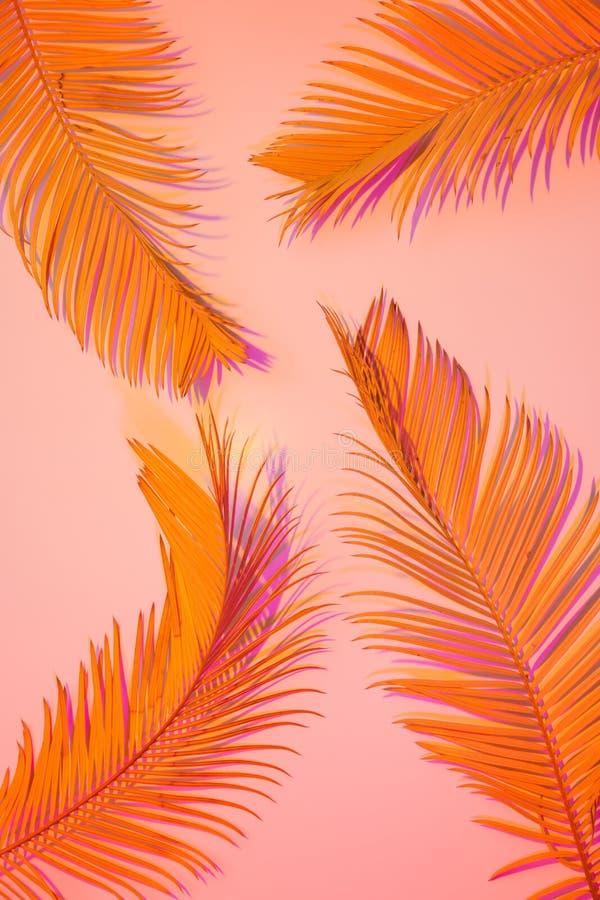 Fond tropical d'été - feuilles exotiques colorées photos libres de droits