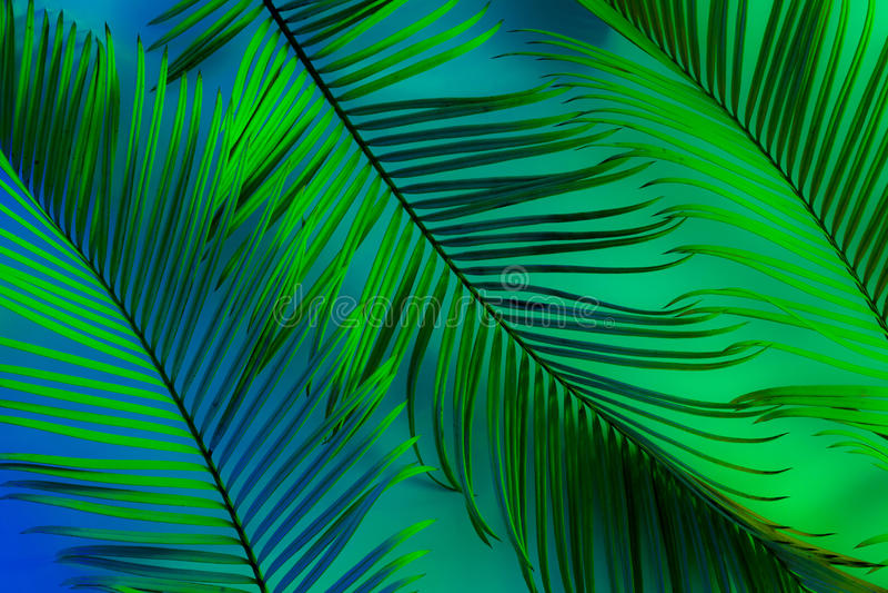 Fond tropical d'été - feuilles exotiques colorées image libre de droits