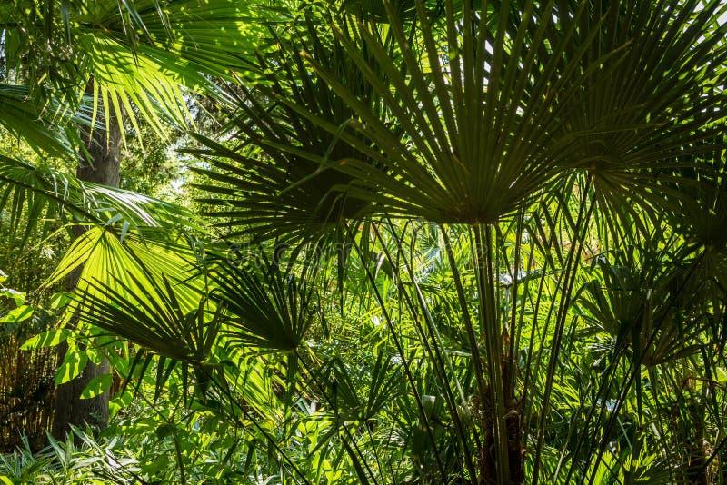 Fond tropical d'été - feuilles exotiques vertes photos stock