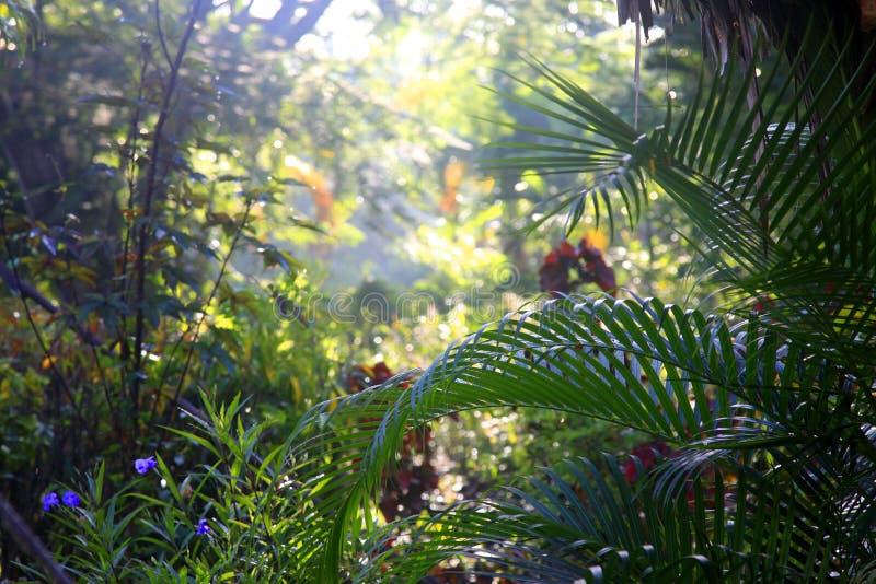 Fond tropical d'arbres image stock