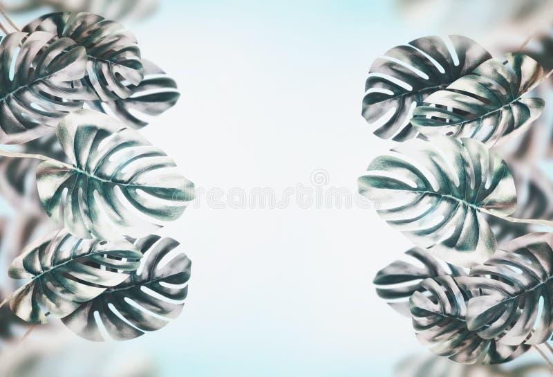 Fond tropical de feuilles Branches avec des feuilles de Monstera au ciel bleu image libre de droits