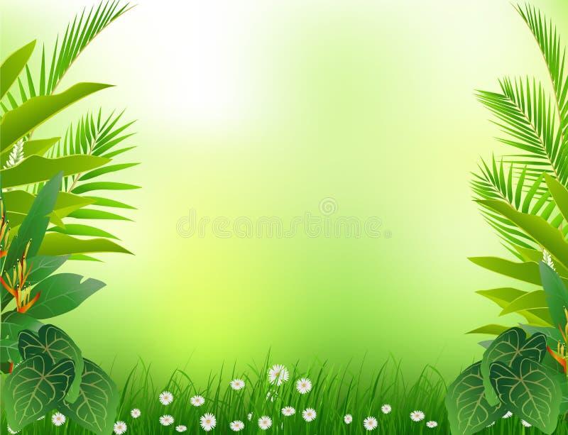 Fond tropical de forêt de beauté illustration libre de droits
