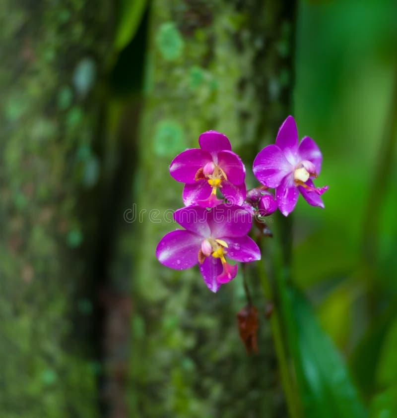 Fond tropical de nature de fleur d'orchidée image libre de droits