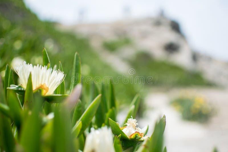 Fond trouble de fleurs blanches photos libres de droits