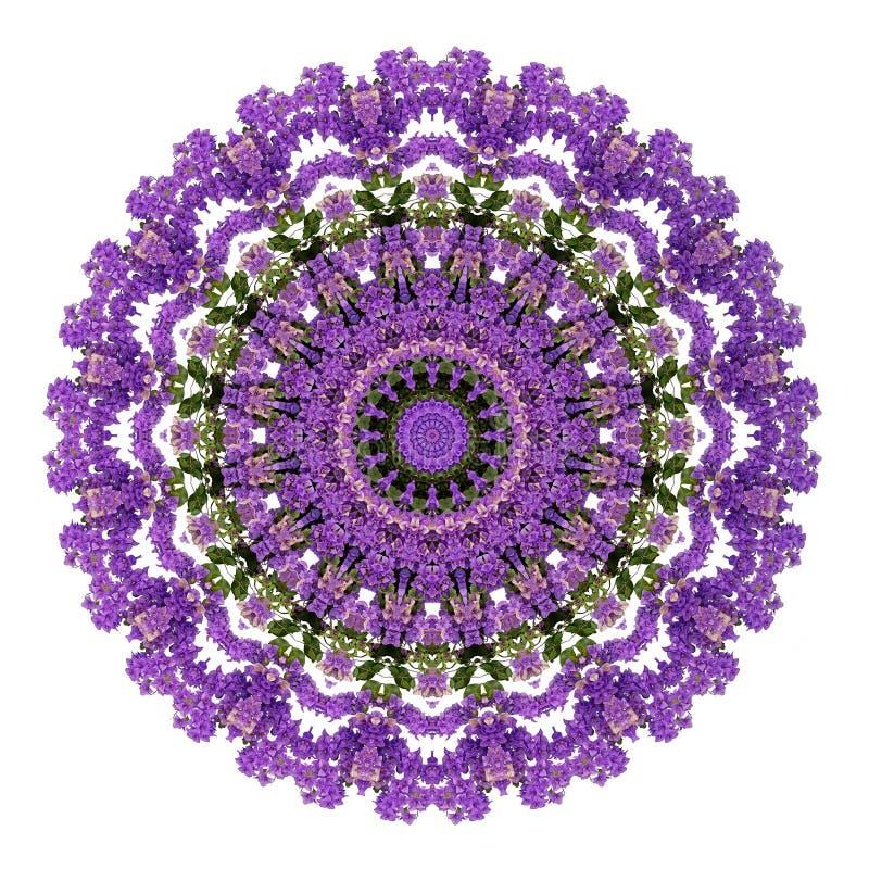 Fond ultra-violet abstrait, fleurs tropicales de bouganvillée illustration libre de droits