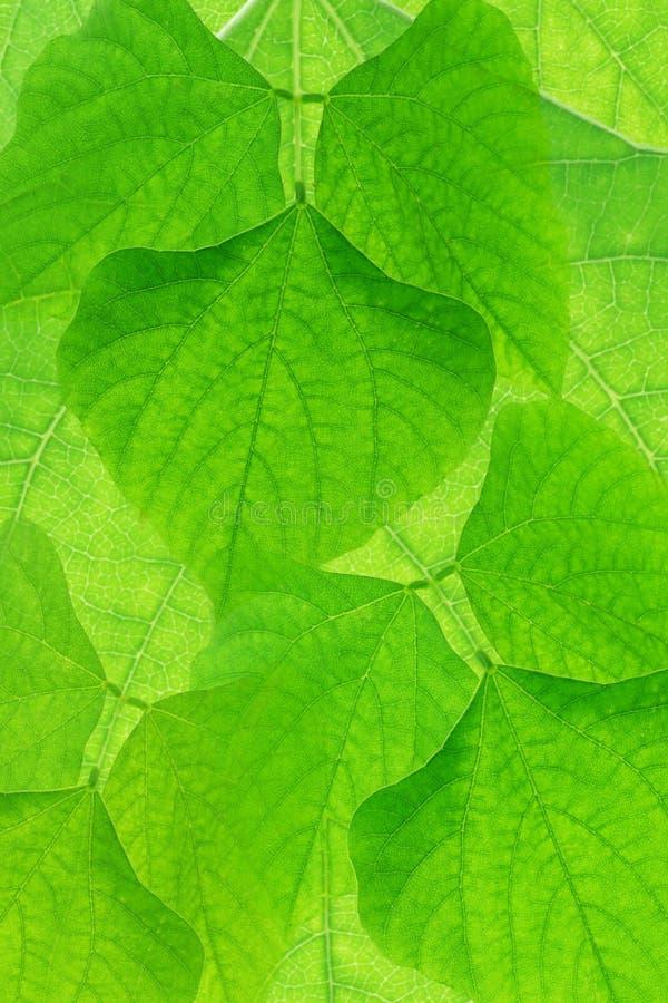 Fond vert abstrait de leves photos stock