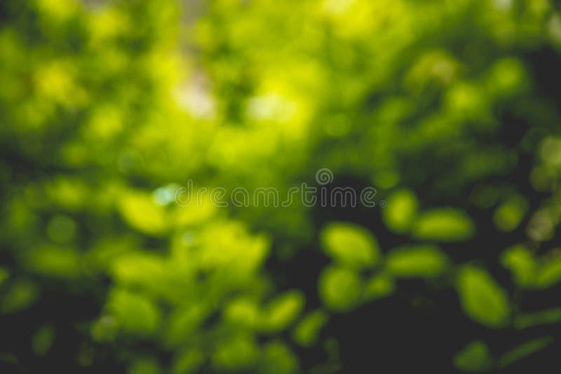 Fond vert abstrait de nature photos libres de droits