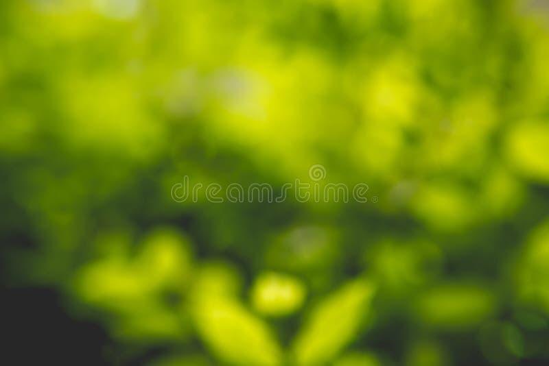 Fond vert abstrait de nature photographie stock libre de droits