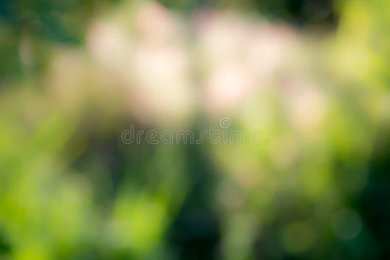 Fond vert abstrait ensoleillé de nature, foyer sélectif photos libres de droits