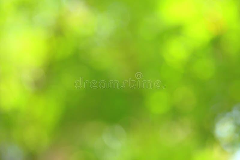 Fond vert abstrait ensoleillé de nature, foyer sélectif image stock
