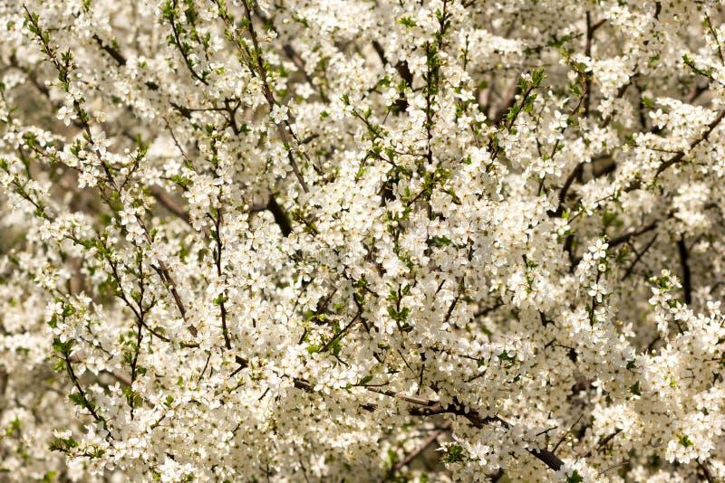 Fond vert abstrait ensoleillé de nature, foyer sélectif images stock