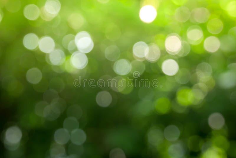 Fond vert abstrait ensoleillé de nature, parc de tache floue avec la saison de lumière, de nature, de jardin, de ressort et d'été photos stock
