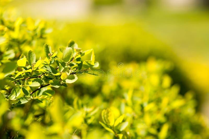 Fond vert abstrait ensoleillé de nature, sélectif photographie stock libre de droits