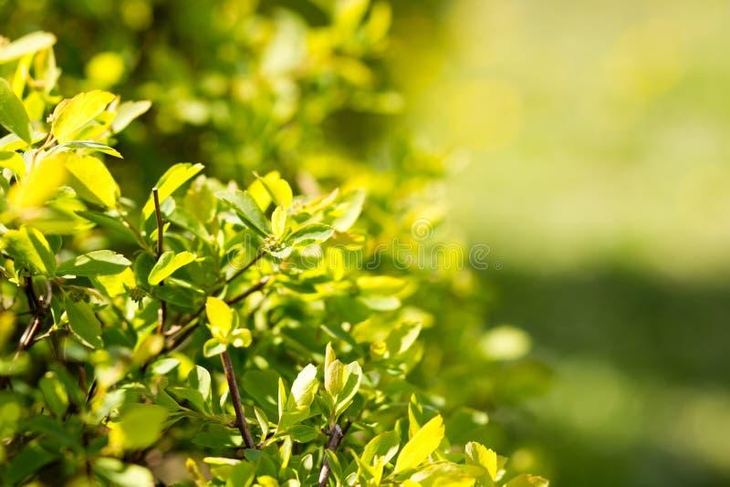 Fond vert abstrait ensoleillé de nature, sélectif image stock