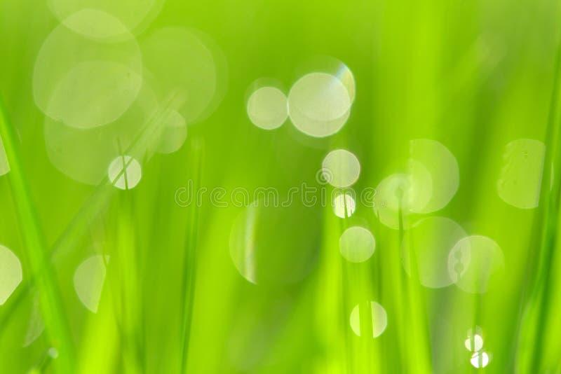 Fond vert abstrait ensoleill? de nature, foyer s?lectif image stock