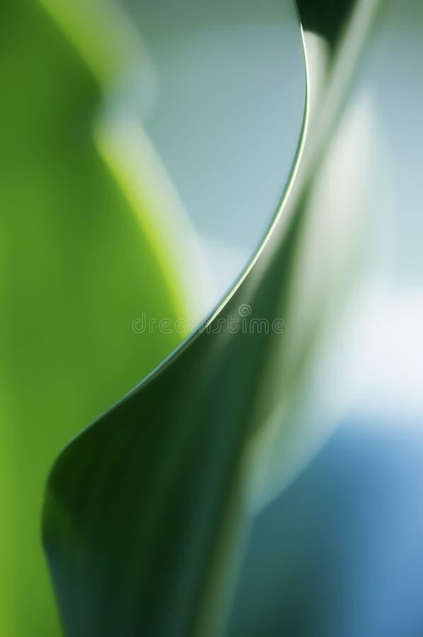 Fond vert artistique de feuille de Dracaena image stock
