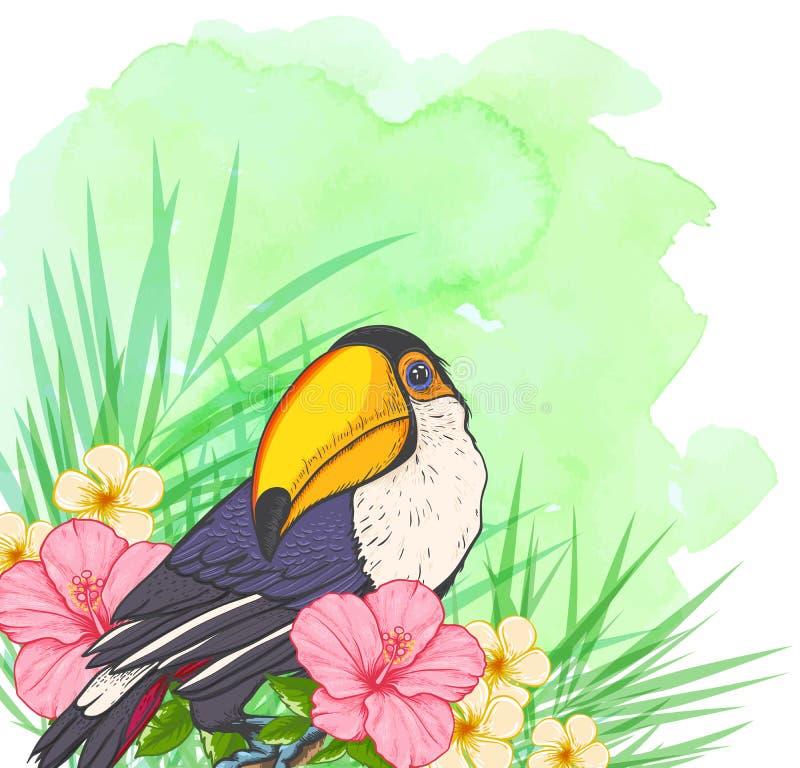 Fond vert d'été avec le toucan illustration de vecteur