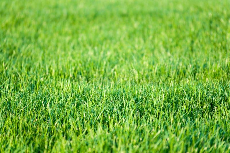 Fond vert d 39 herbe de pelouse image stock image du for Prix de pelouse