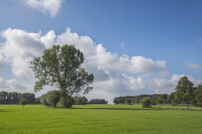 Fond vert d'horizontal photo stock
