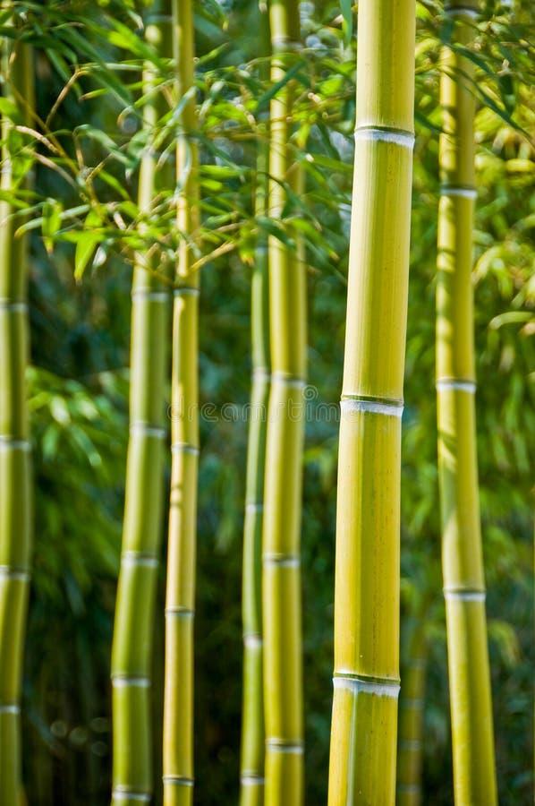 Fond vert de bambous photos libres de droits