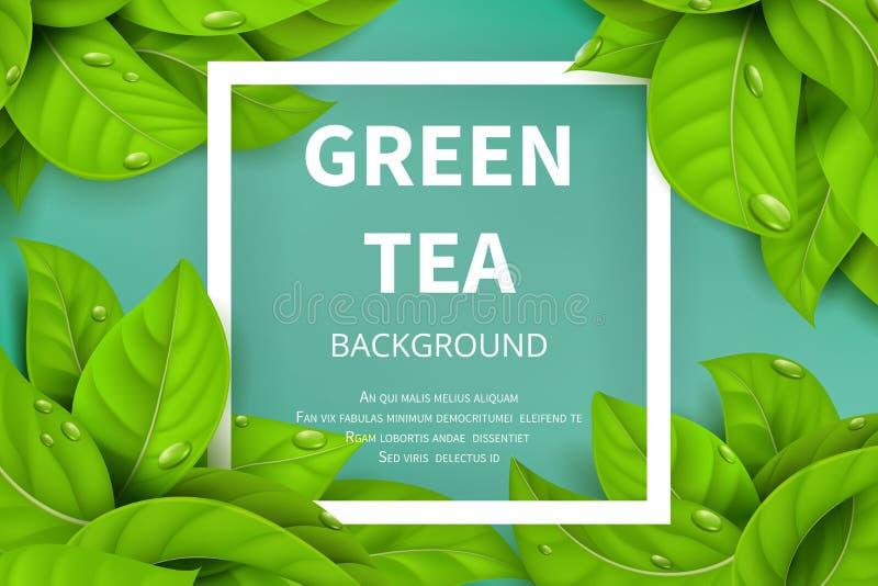 Fond vert de nature de vecteur de feuilles de thé illustration de vecteur