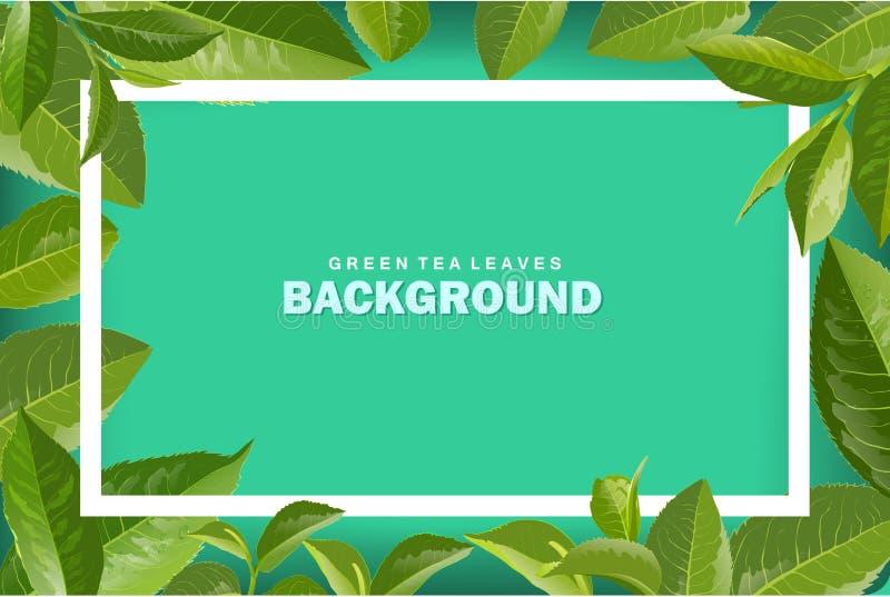 Fond vert de nature de vecteur de feuilles de thé illustration libre de droits