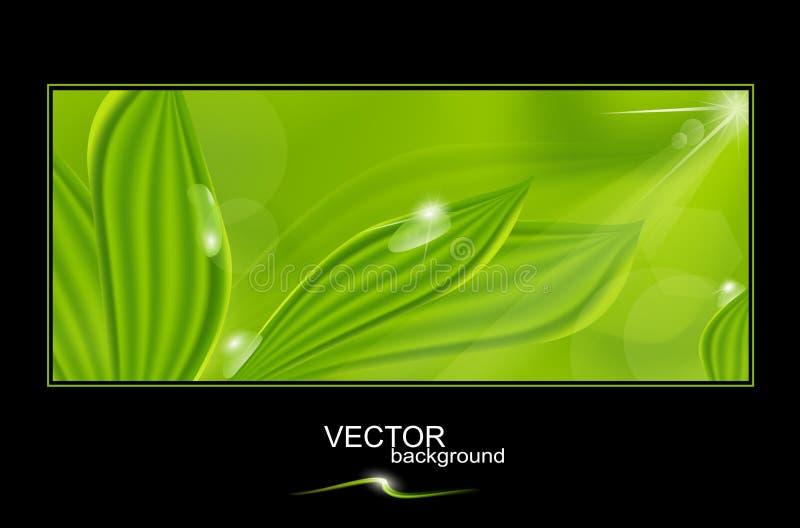 Fond vert de vecteur avec des lames et des baisses illustration de vecteur