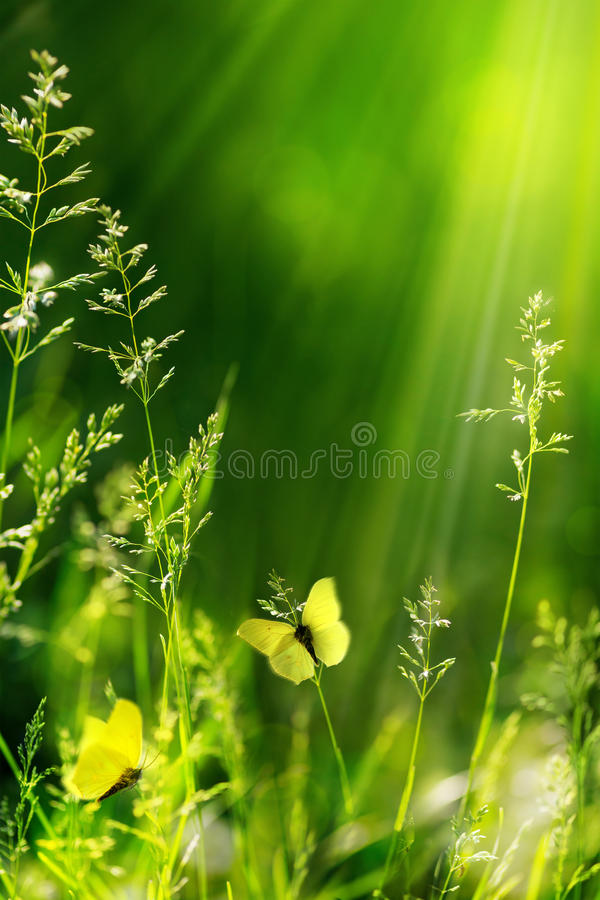 Fond vert floral de nature d'été abstrait images libres de droits