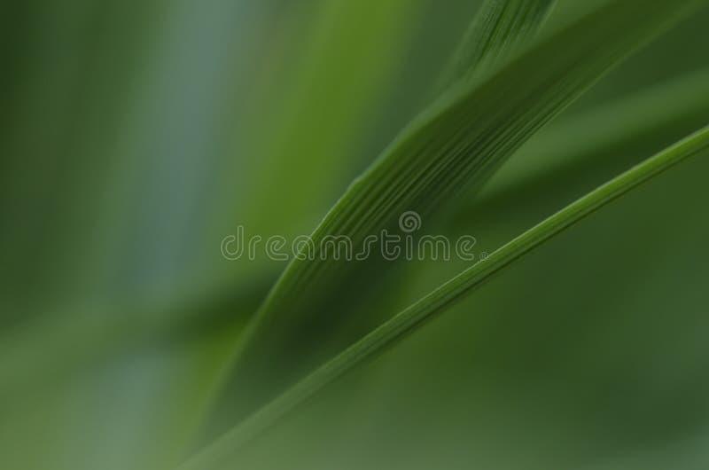 Fond vert-foncé photo libre de droits