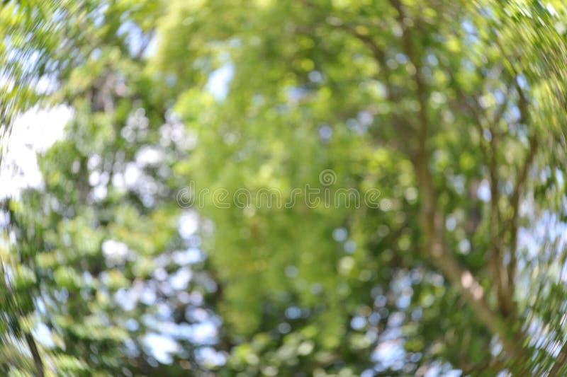Fond vert spécial de Bokeh images stock