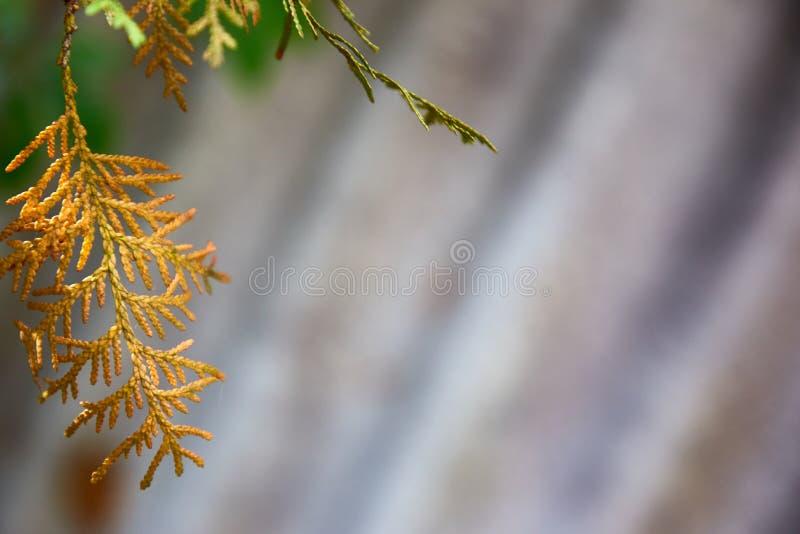 Fondo áspero gris Textura ondulada de la pizarra Ondas oblicuas Ramita amarilla brillante foto de archivo