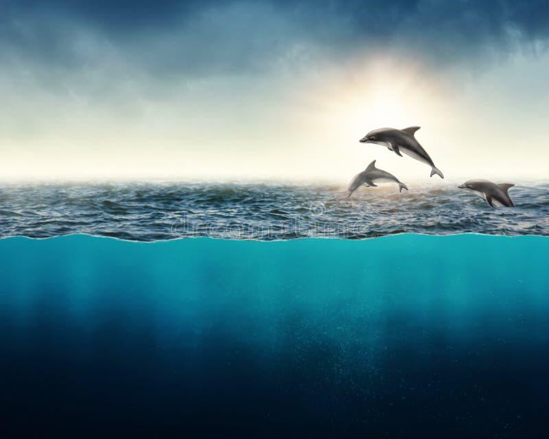 Fondo abstracto con los delfínes imagen de archivo libre de regalías