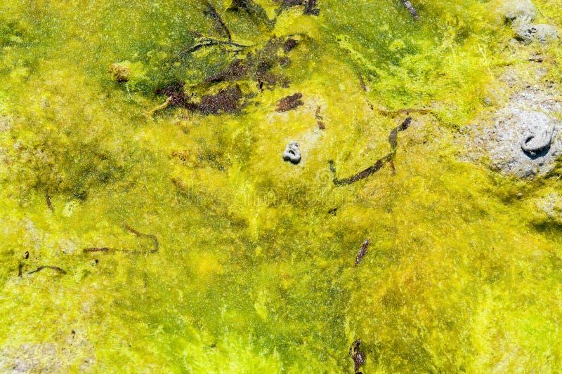 Fondo abstracto de la alga marina fotografía de archivo libre de regalías