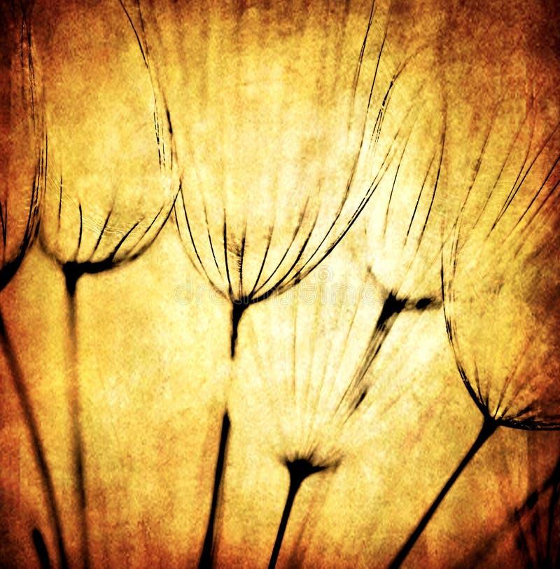 Fondo abstracto de la flor del diente de león de Grunge fotografía de archivo libre de regalías