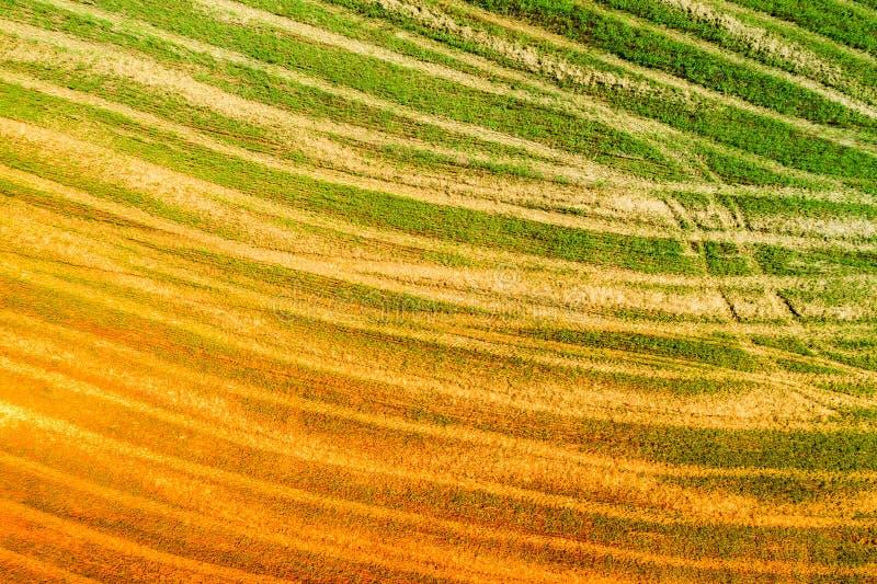 Fondo abstracto de la naturaleza creado de la foto del campo biselado fotografía de archivo