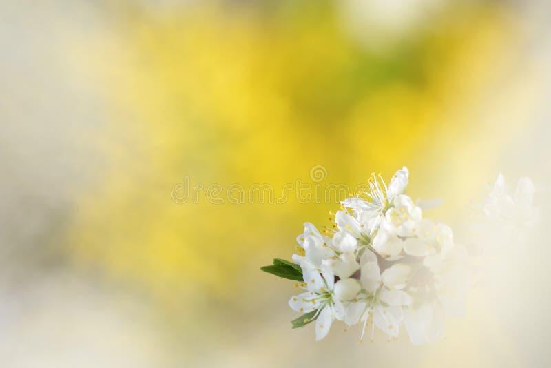 Fondo abstracto de la primavera fotografía de archivo
