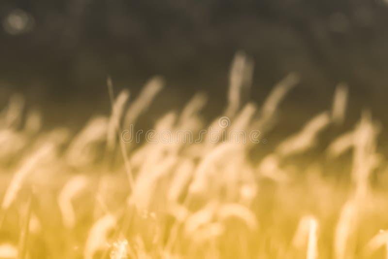 Fondo abstracto de la primavera o de la naturaleza del verano con la hierba en el prado y el cielo azul en el campo trasero foto de archivo libre de regalías