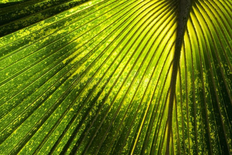 Fondo abstracto de la selva foto de archivo libre de regalías