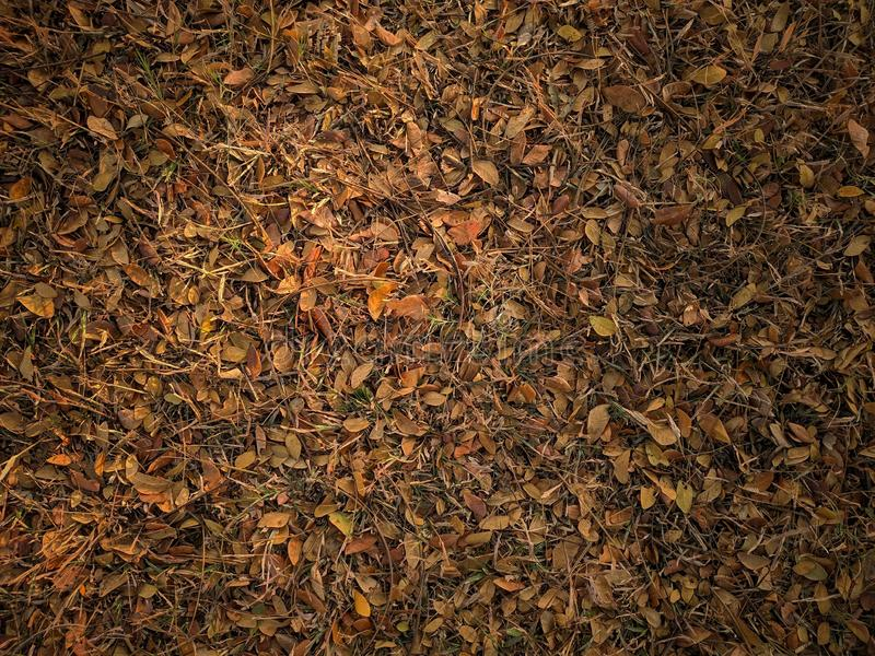 Fondo abstracto de la textura de las hojas de otoño imagenes de archivo